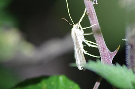2907-moth