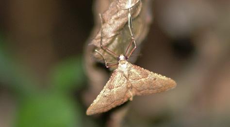 2907-moth2