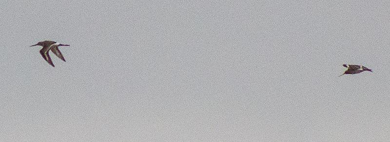 IMGP6154